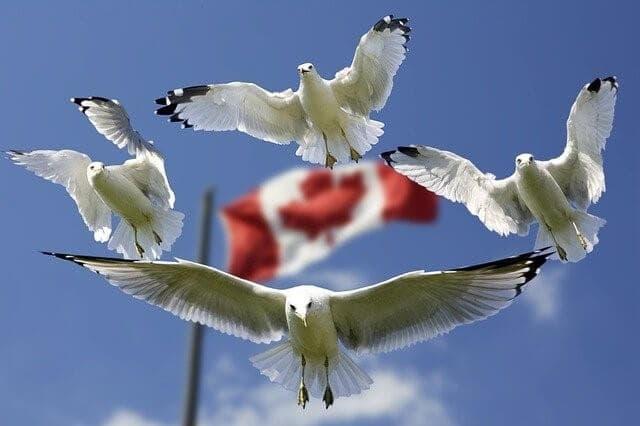 Canadian Slang - blog LingRoom
